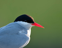 Tern's Eye View